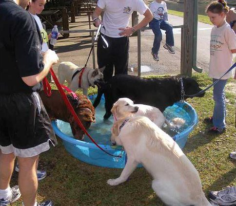 5k---dogs-cooling-off